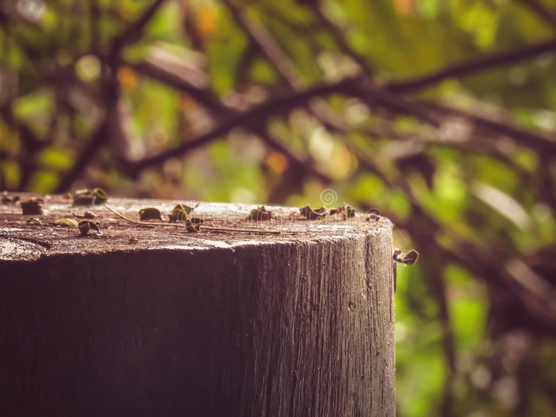 Brown Trunk closeup covered with leaves. NForest Bokeh background filled with branches royalty free stock photography