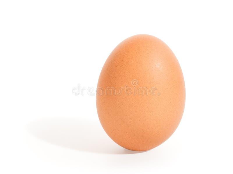 Brown trwanie jajko odizolowywający z ścinek ścieżką zdjęcie royalty free