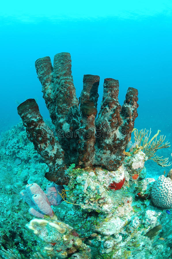 Download Brown Tube Sponges Royalty Free Stock Photography - Image: 22606327