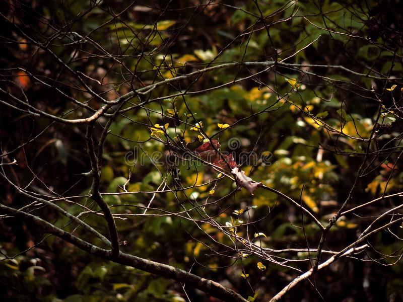 Brown Twigs With No Leaves royalty free stock images