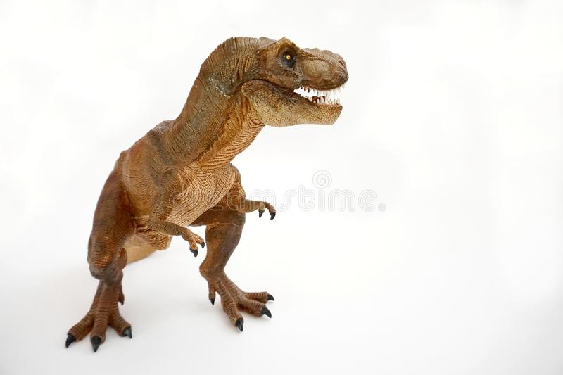 Brown tyrannosaurus rex t-rex, coelurosaurian theropod dinosaur didactic figure with open mouth. Showing sharp teeth, full body, placed on the left on a white stock photography