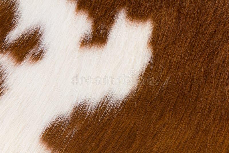 Brown und weißes Rindleder stockfotografie
