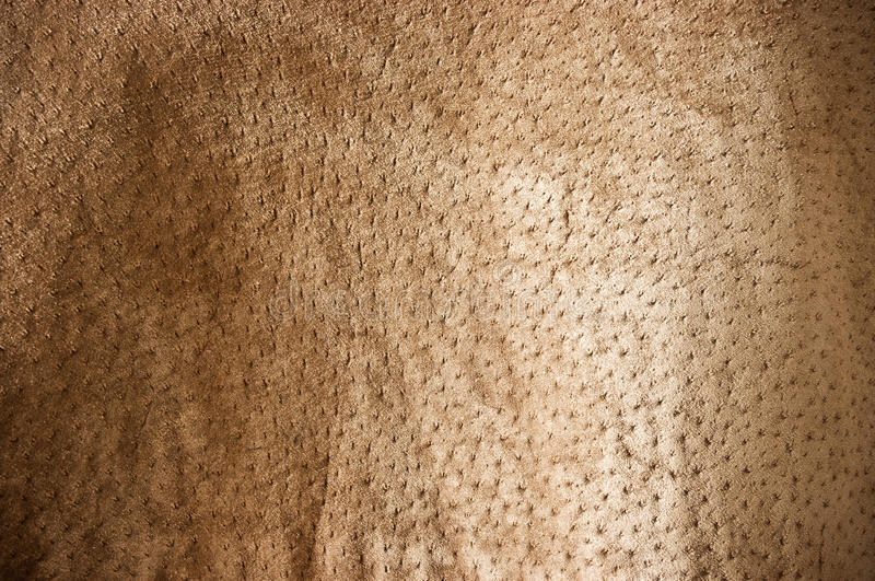 Download Brown undulating stock photo. Image of cowhide, rough - 23632914