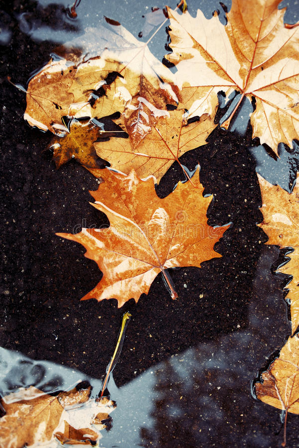 Brown Wet Leaves Stock Photos
