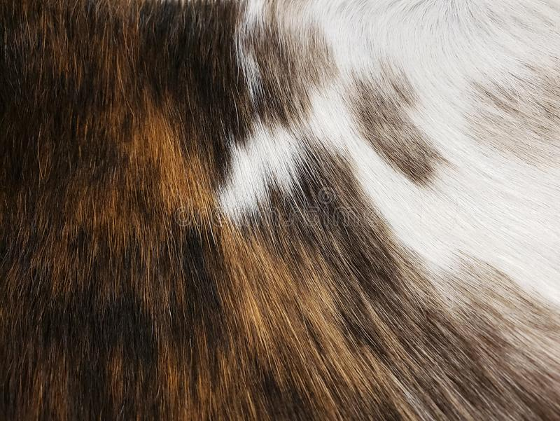 A brown and white animal fur background stock photos