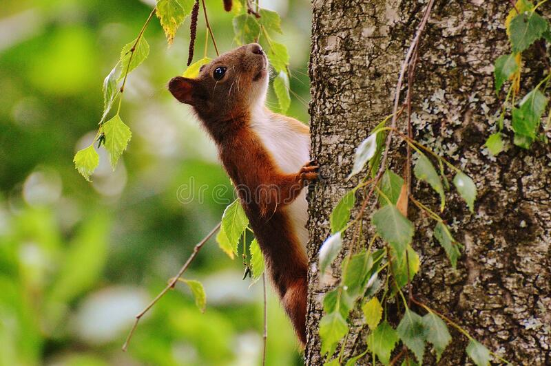 Brown and White Animal on Brown Tree stock image