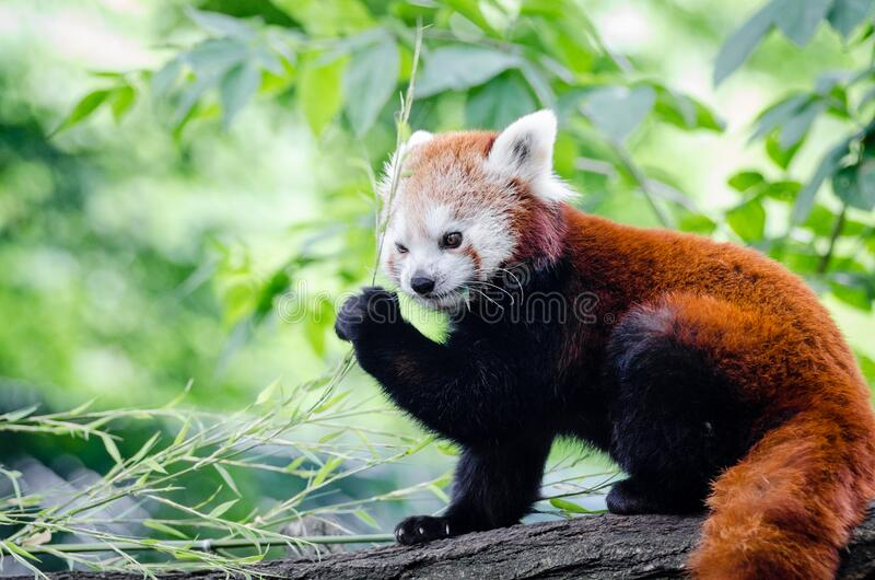 Brown and White Bear on Tree Branch during Daytime royalty free stock photos