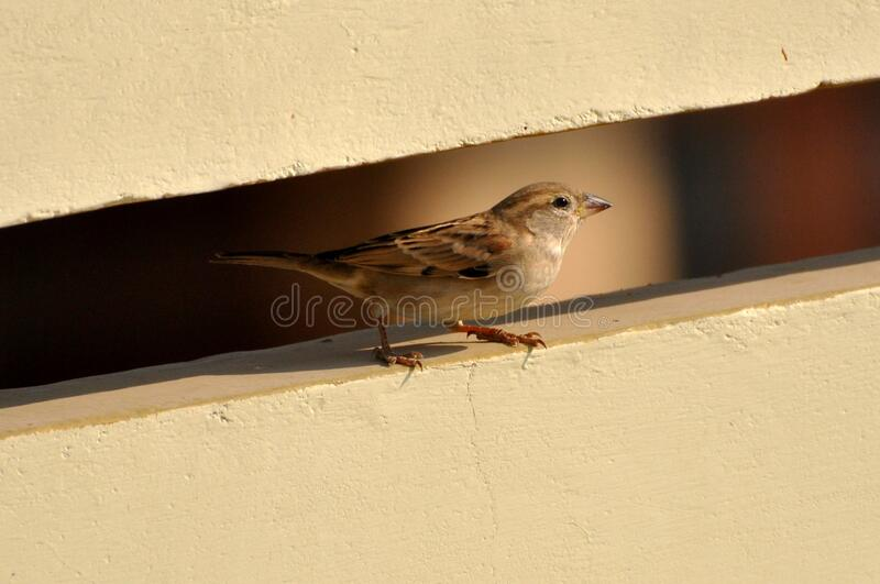 Brown and White Bird on White Wall Paint stock images