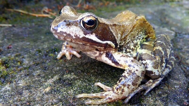 Brown And White Frog In Concrete Pavement Free Public Domain Cc0 Image