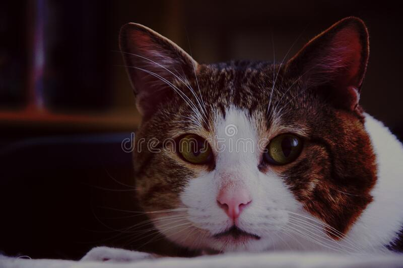 Brown White Gray Cat in Close Up Photography stock images