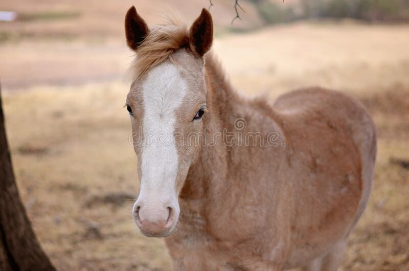 Brown And White Horse Free Public Domain Cc0 Image