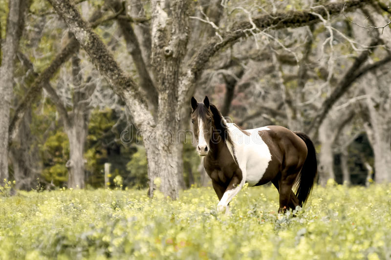Brown & white horse in fall pasture stock photo