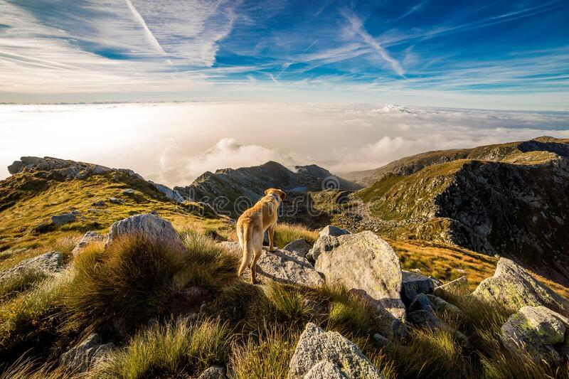 Brown and White Short Coat Dog on Mountain royalty free stock images