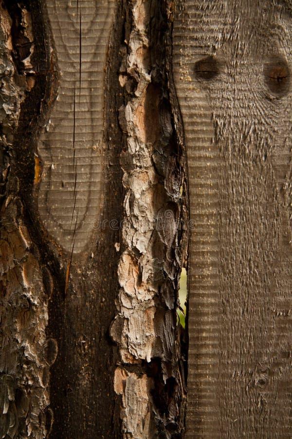 Brown wood royalty free stock image