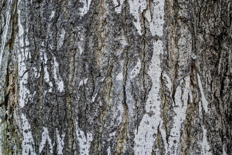 Download Brown wood background stock photo. Image of rustic, flat - 84507370