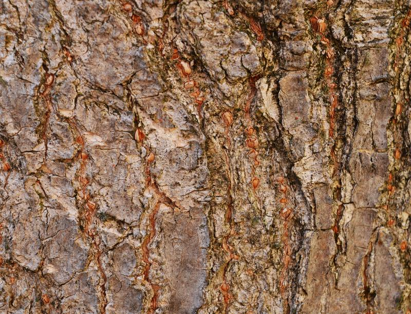 Brown bark for background stock image