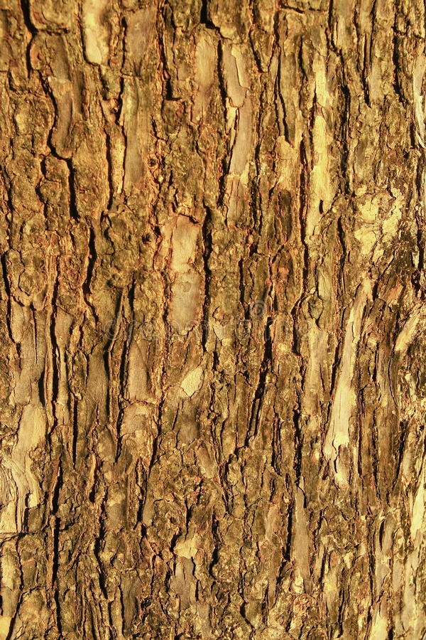 Free Brown Wood Bark Texture Royalty Free Stock Image - 18603046
