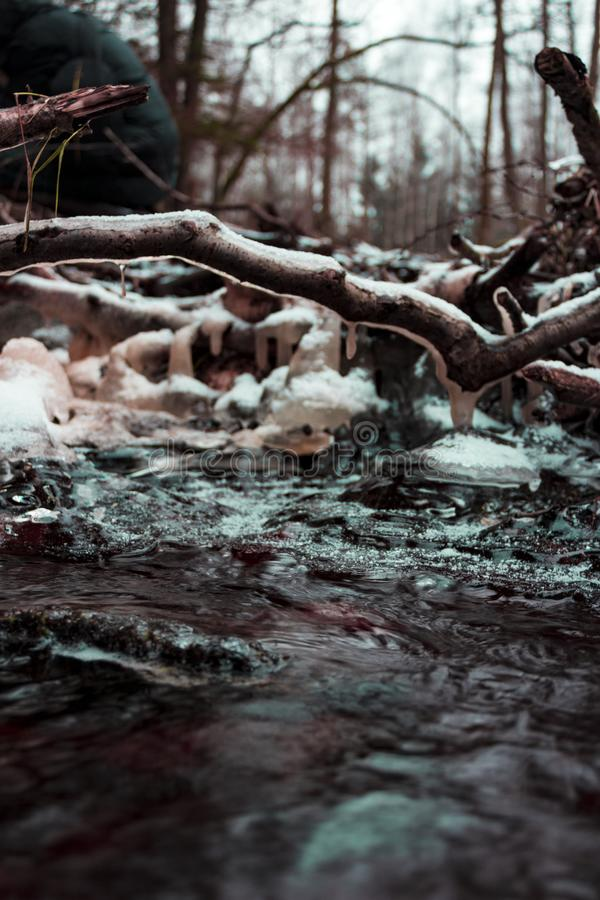 Brown Wood Branch Coated With Ice Near Water Photo royalty free stock images