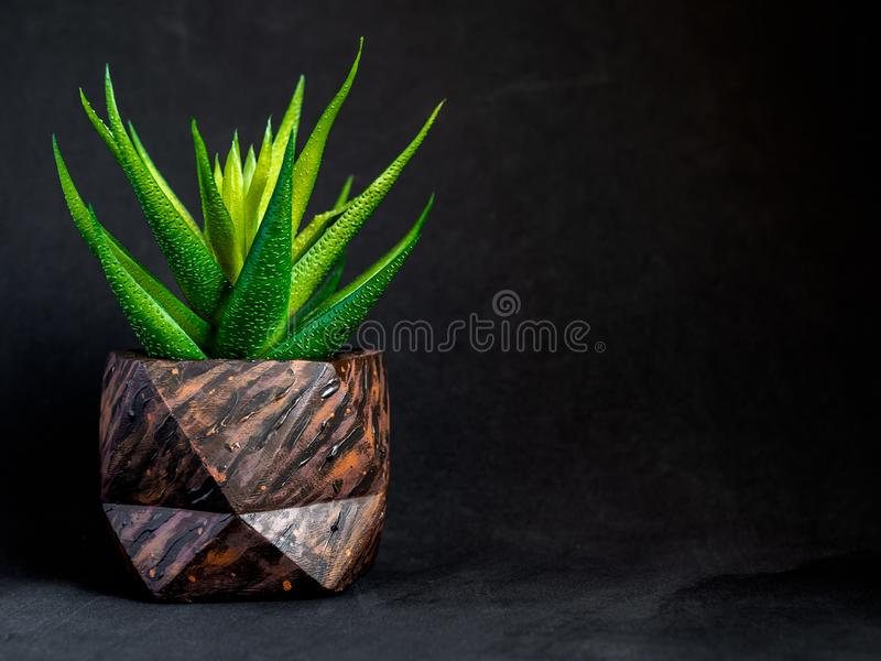 Brown wood pattern painted geometric concrete planter with succulent plant. Painted concrete pots for home decoration royalty free stock image