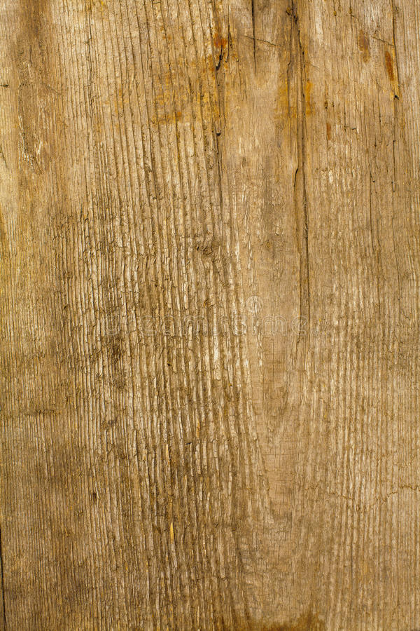 The brown wood texture stock image