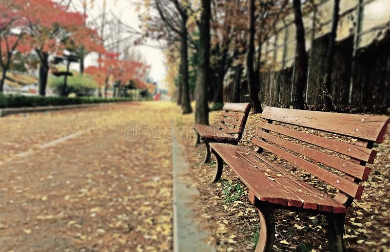 Brown Wooden Bench With Brown Dried Leaves stock photo