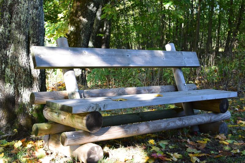 Brown Wooden Bench Near Tree Stem royalty free stock photo