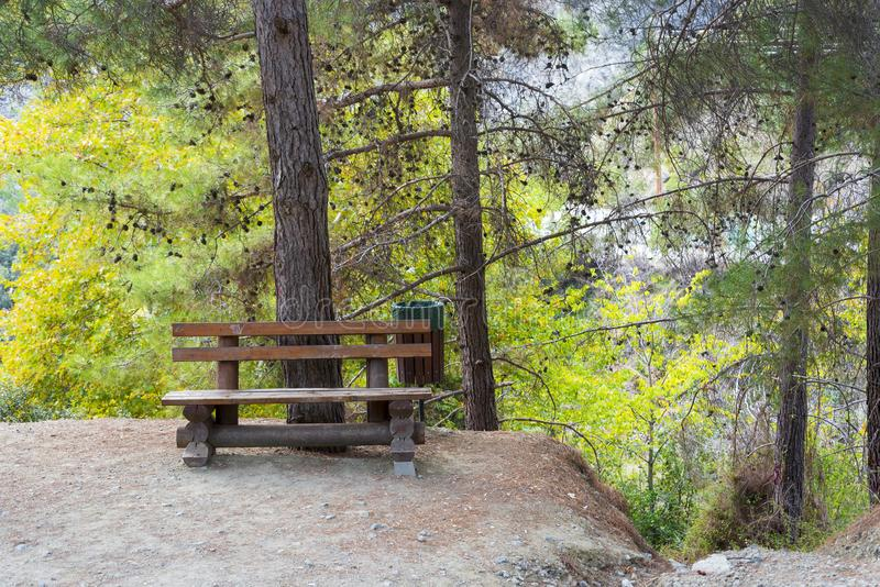 Brown wooden bench in the Park near a spruce tree. The concept of travel and tourism royalty free stock photography
