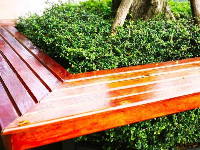 The brown wooden bench was built around the tree and planted the. Small shrub in the middle, located along sidewalk in the public park in Thailand. Selective royalty free stock photography