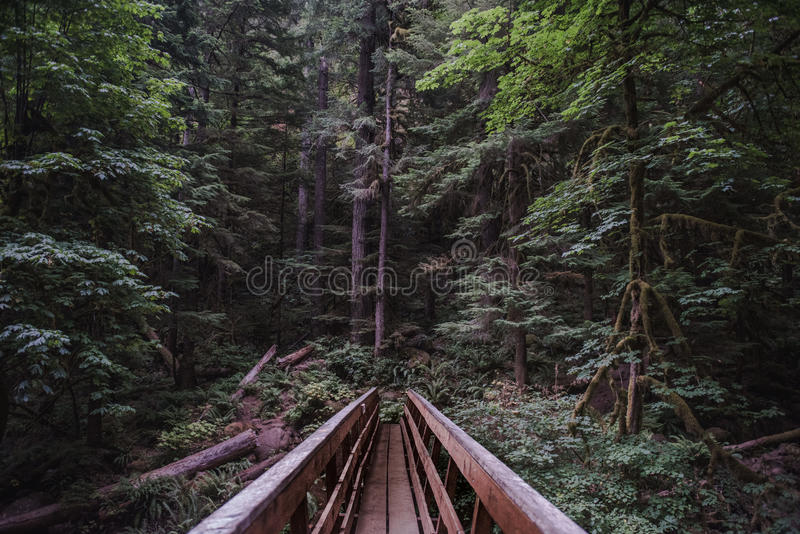Brown Wooden Bridge Across Forest During Daytime Free Public Domain Cc0 Image