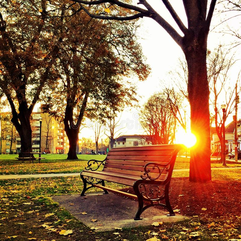 Brown Wooden Park Bench Under Green Leaf Tree during Sunset royalty free stock photography