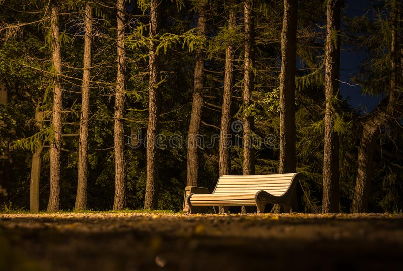 Brown Wooden Slatted Bench Near Brown Tree Trunk royalty free stock photography