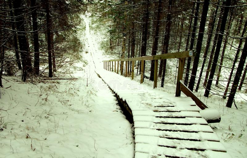 Brown Wooden Stairs Covered With Snow royalty free stock images