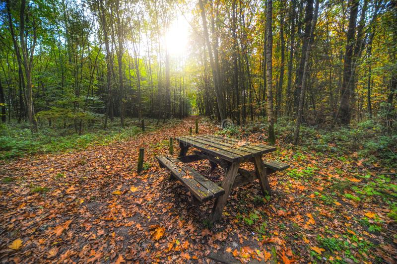 Brown Wooden Table With Bench Near Green Trees stock image