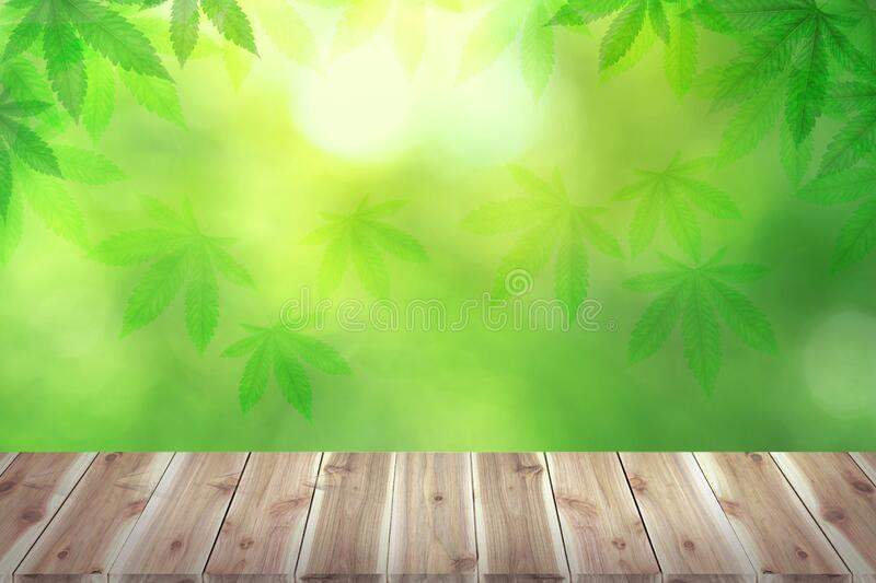 Brown wooden table board empty on Marijuana leaves, cannabis , the pastel green textured background. Medicinal plant in contour style for summer design royalty free stock photography