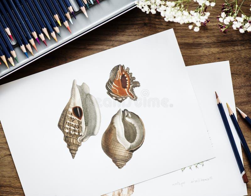 Brown y concha roja Shell Drawing en el Libro Blanco al lado de tres lápices imagen de archivo libre de regalías