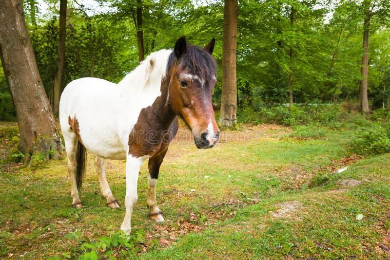 Brown y el nuevo caballo blanco del potro del bosque en salida del sol ajardinan foto de archivo