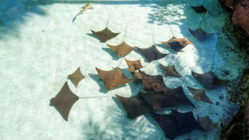 Brown y rayos de picadura negros bajo luz del sol brillante foto de archivo libre de regalías