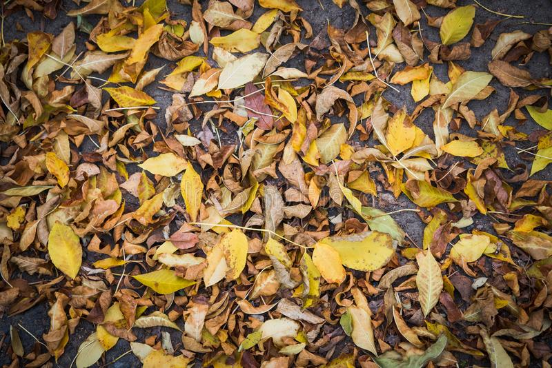 Brown and yellow fallen autumn leaves on the ground royalty free stock photos