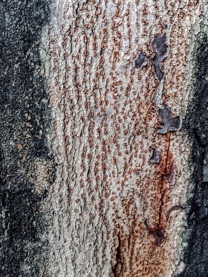 Brown, zielonego i czarnego tekstury tło, obraz stock