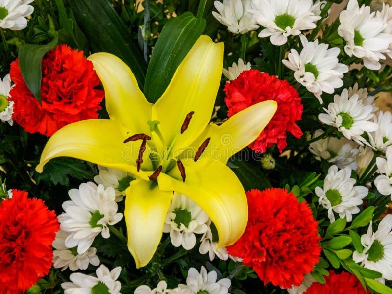Brownii var лилии стоковое изображение rf