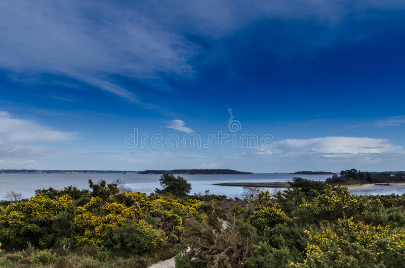 Brownsea wyspa obraz stock