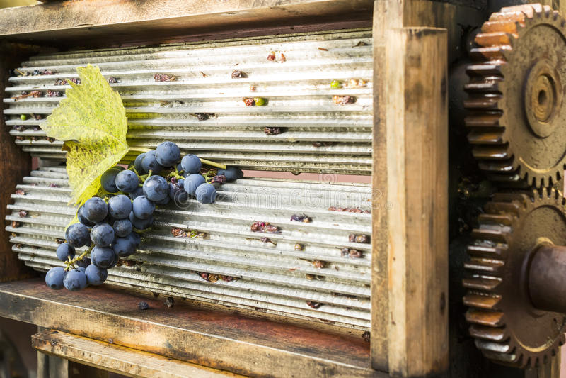 Broyeur de raisin images libres de droits