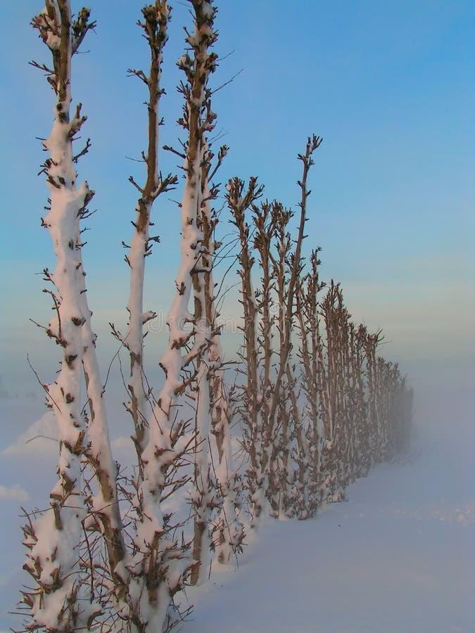 Download Brrrrr. stock photo. Image of trees, cold, landscape, freezing - 8776
