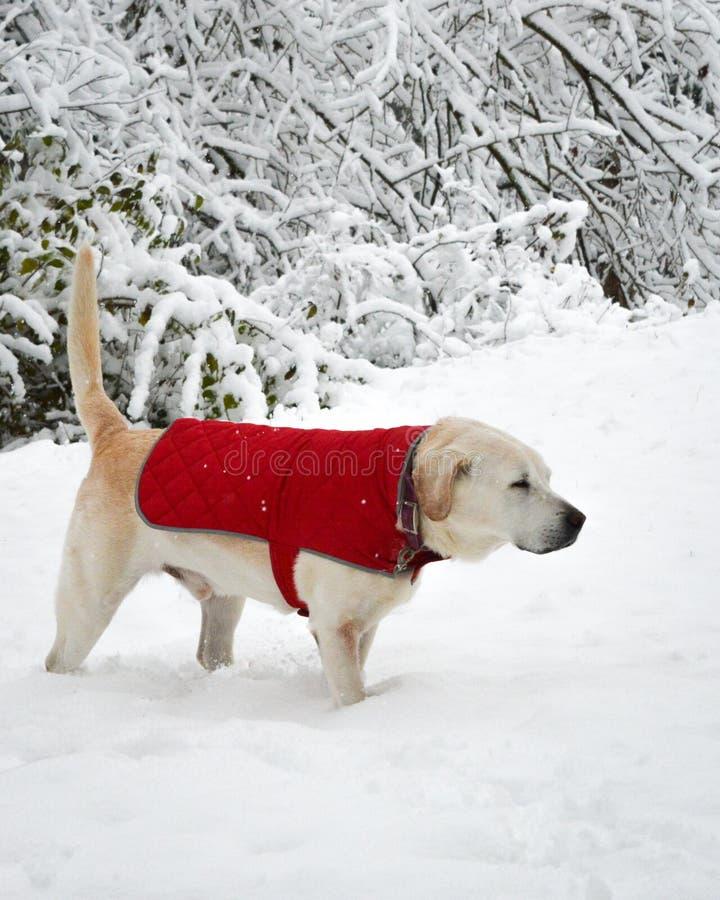 Brrrrr! fotografia de stock