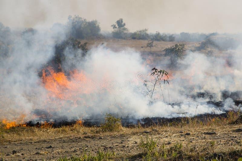 Bruciatura di un campo del raccolto, l'India fotografia stock libera da diritti