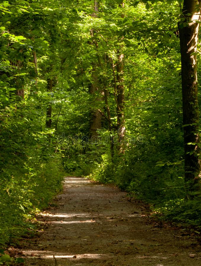 Brud ścieżka przez drewien z zielonymi obfitolistnymi drzewami zdjęcie stock