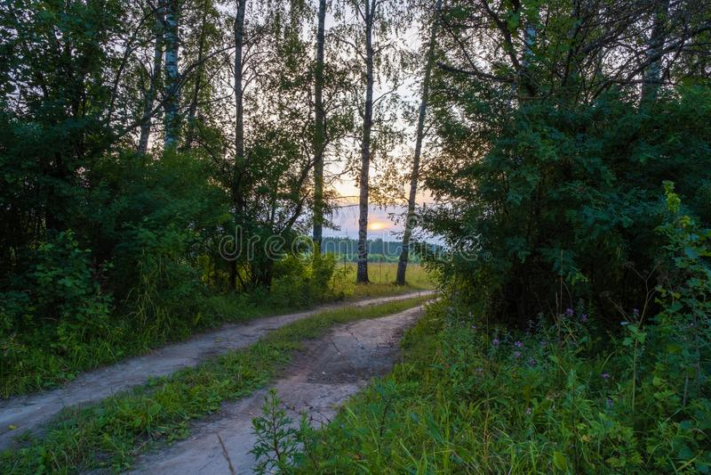 Brud lasowa droga w backlight położenia słońce zdjęcie stock