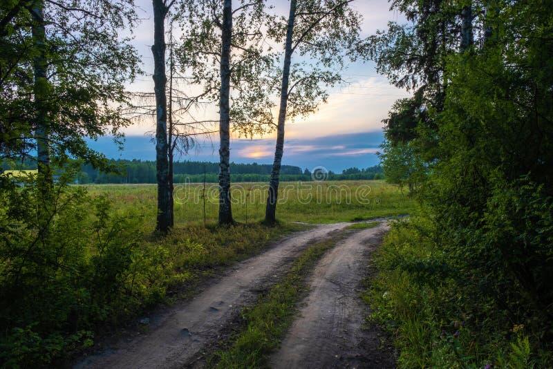 Brud lasowa droga w backlight położenia słońce obraz stock