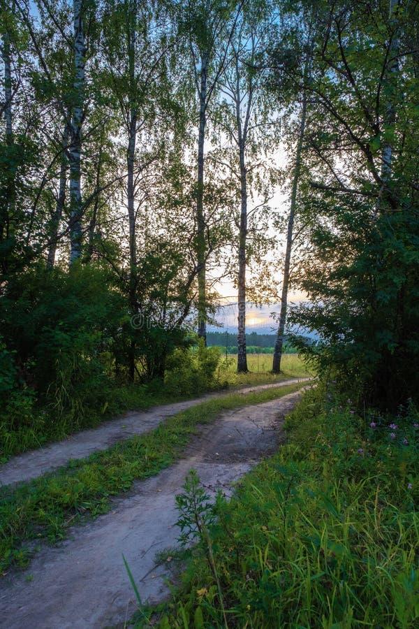 Brud lasowa droga w backlight położenia słońce fotografia stock