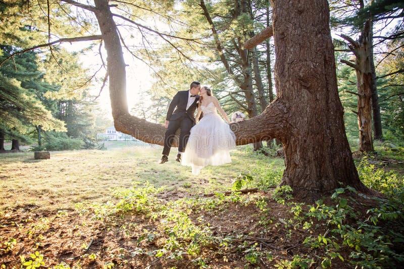 Brud- och brudgumsammanträde, i att kyssa för träd royaltyfri bild